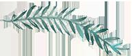 frunzulita